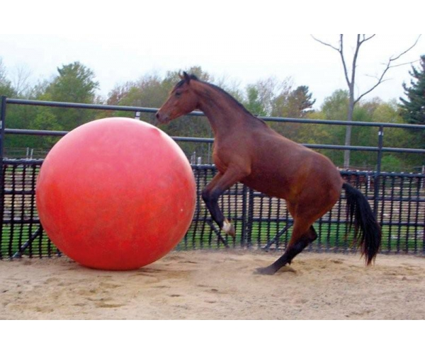 Paardenvoetbal
